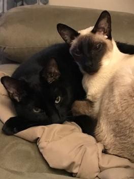 Bagheera & Lucius